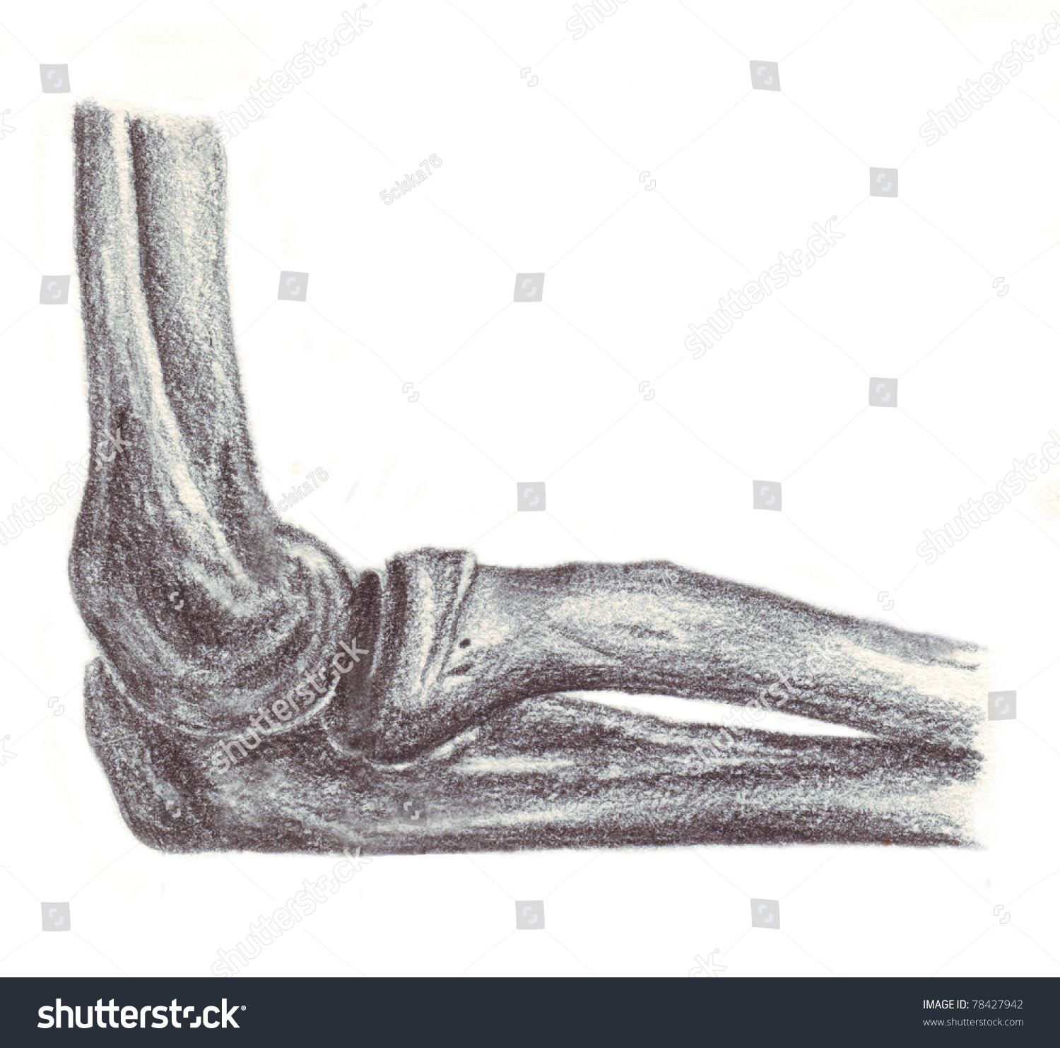 Human Anatomy Articulation Elbow Stock Illustration 78427942 ...