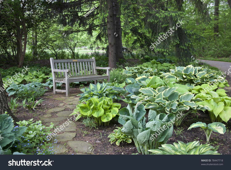 Roses In Garden: Hosta In Inniswood Gardens In Columbus, Ohio Stock Photo