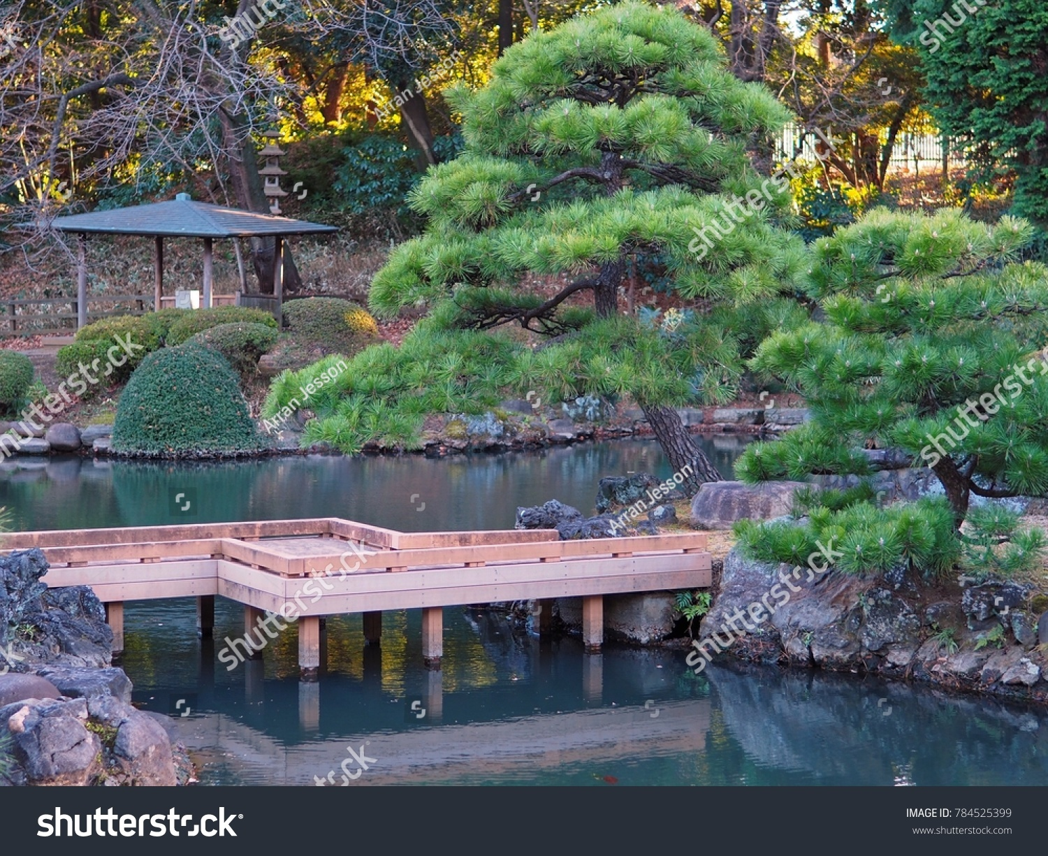 Traditional Japanese Water Garden In Tokyo Including Wooden Bridge, Bonsai  Style Pine Trees, Reflecting