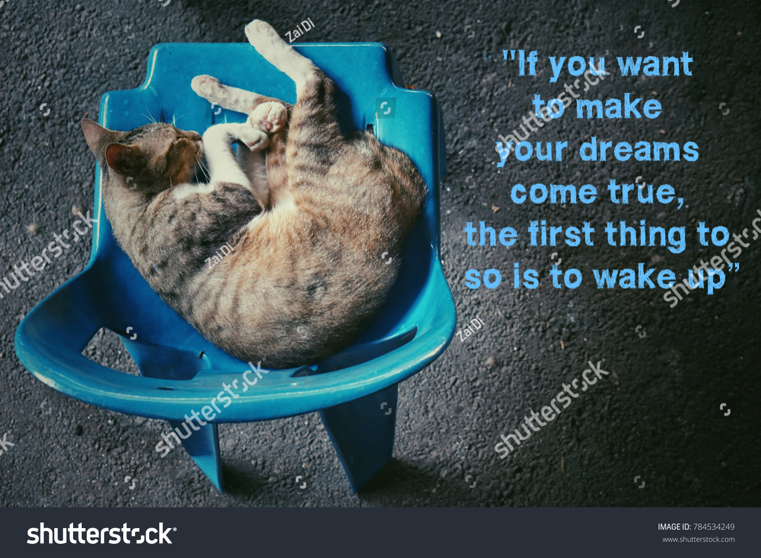 Cat Stock Quote Cat Sleep On Blue Chair Quote Stock Photo 784534249  Shutterstock
