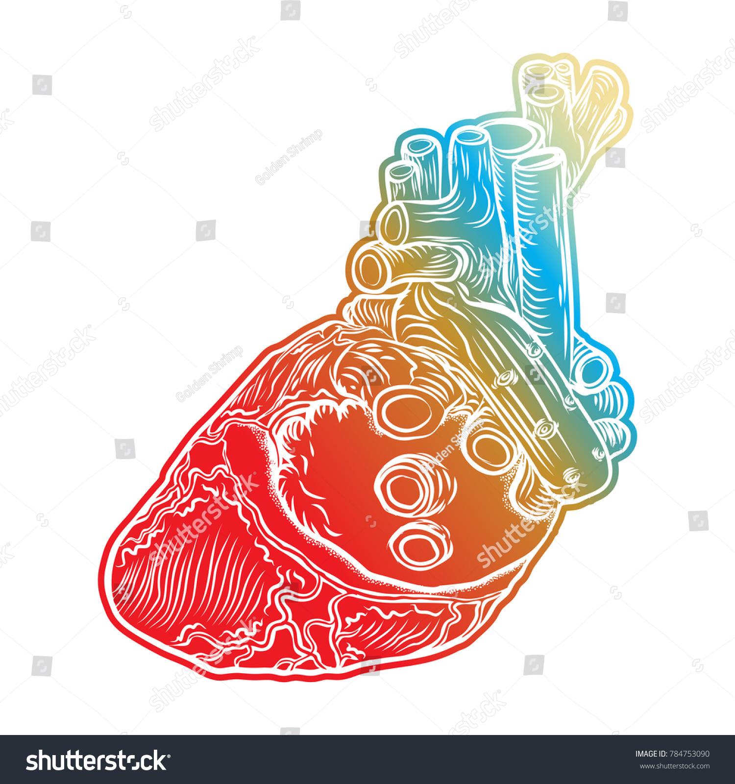 Human Heart Hand Drawn Flesh Tattoo Stock Illustration 784753090 ...