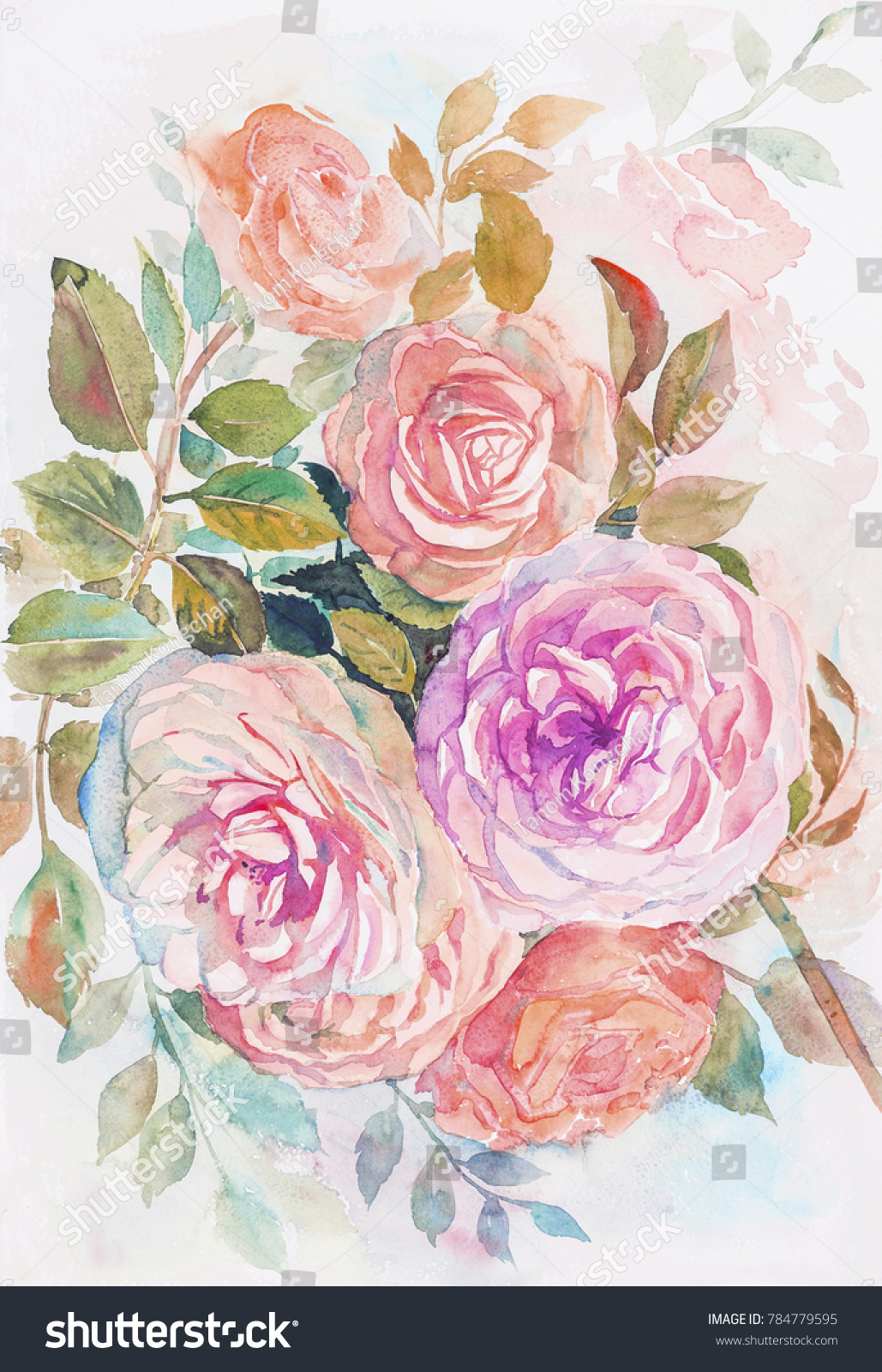 Watercolor Painting Purple Pink Color Roses Stock Illustration