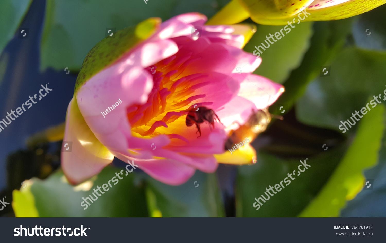 Lotus pink colour and bee ez canvas izmirmasajfo