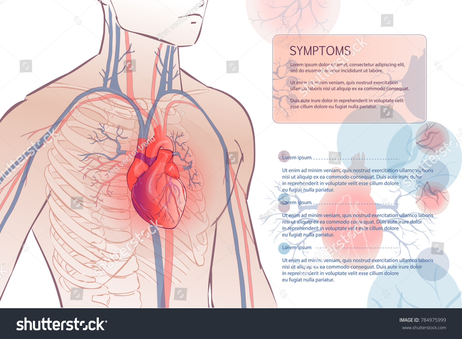 3 d illustration human circulatory vascular system stock 3d illustration of the human circulatory vascular system template anatomical heart man body parts ccuart Gallery