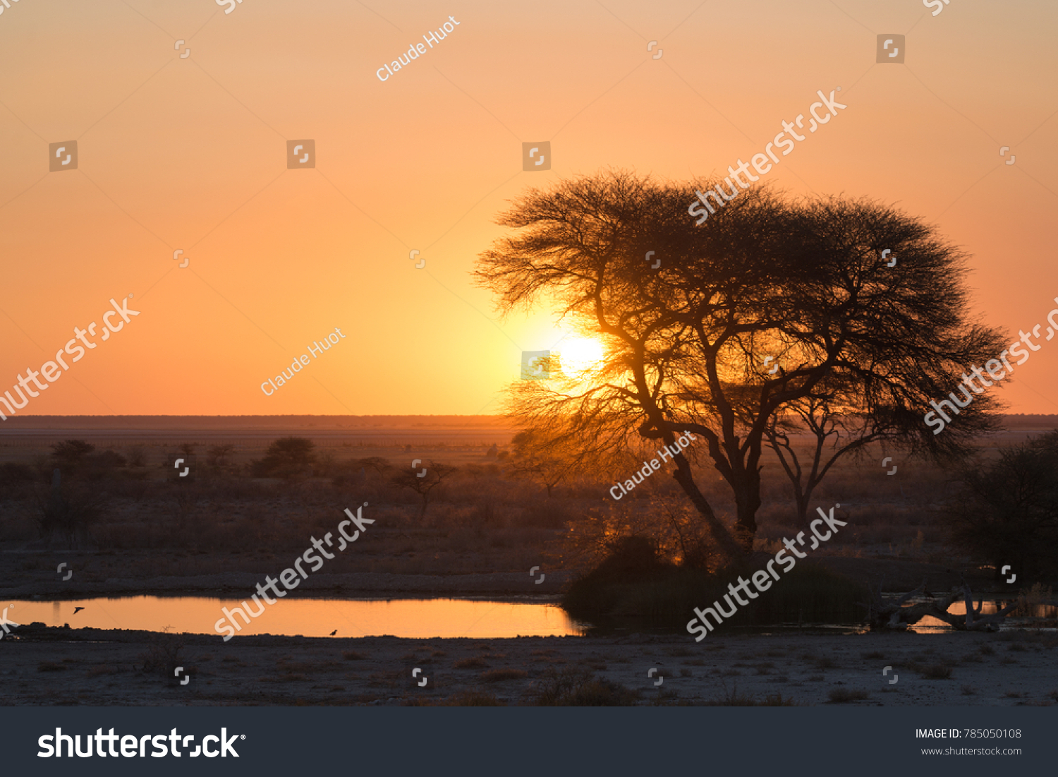 African sunset with a waterhole and a large tree in Onguma looking over the Etosha National Park, Namibia