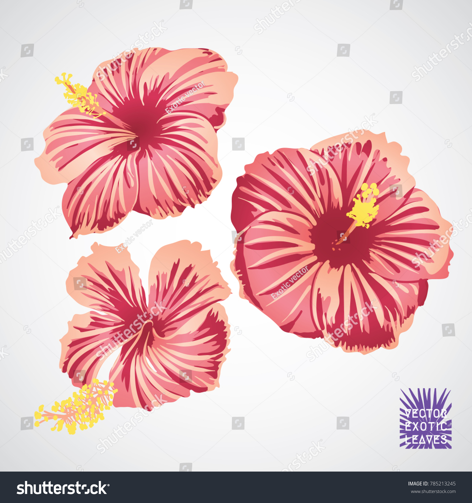 Hibiscus flower pink red yellow color stock photo photo vector hibiscus flower in pink red and yellow color vector silhouette of exotic plant botanical izmirmasajfo