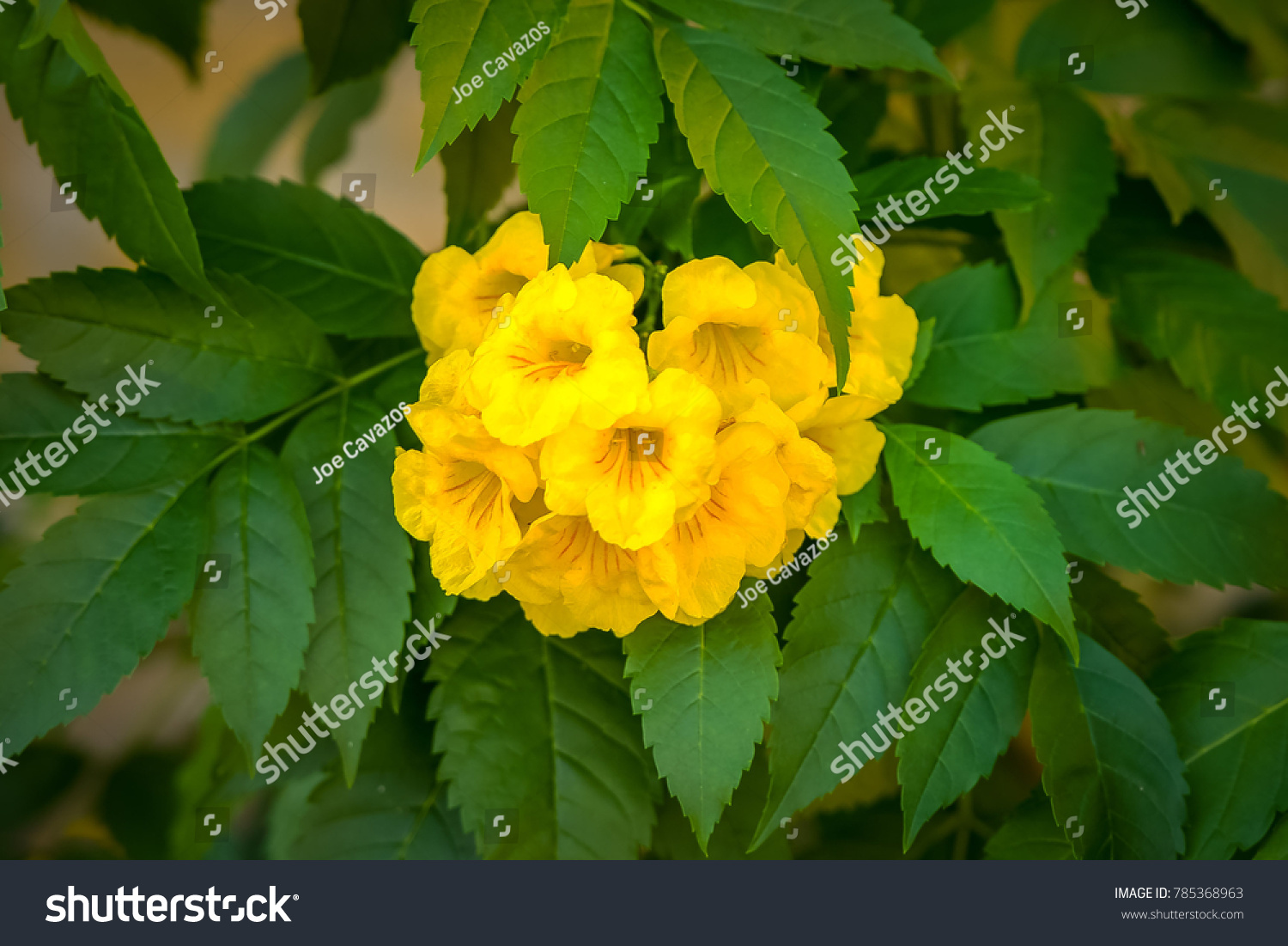 Yellow Flowers And Green Leafs Ez Canvas