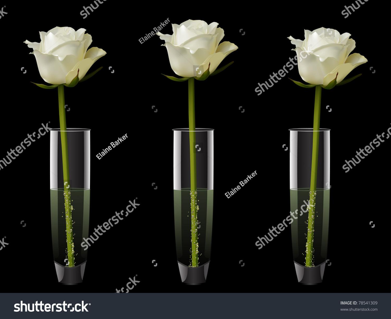 Single white roses three glass vases stock photo 78541309 single white roses in three glass vases on a black background reviewsmspy