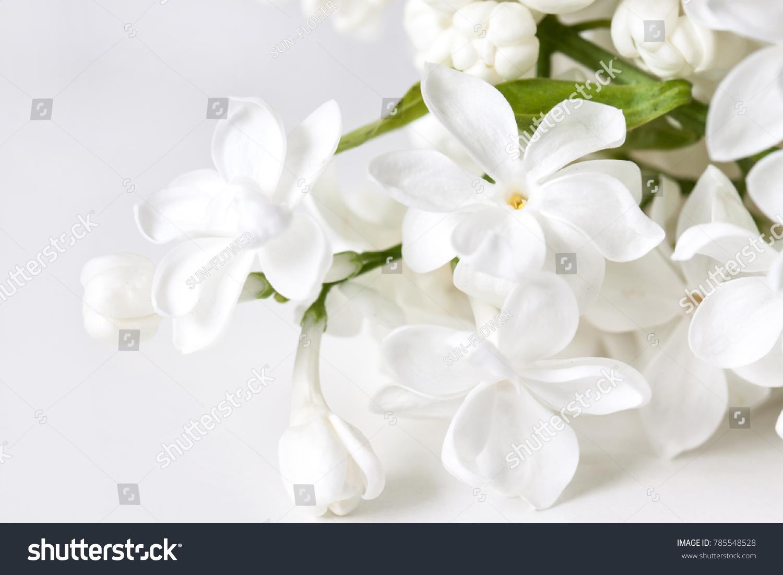 Floral Motif Wallpaper White Lilac Flowers Stock Photo Edit Now