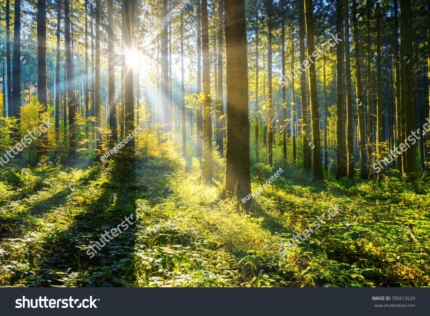 sunrays in the woods #785612629