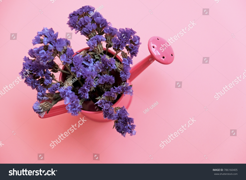 Purple Statice Flower Pink Aluminum Pot Stock Photo Royalty Free