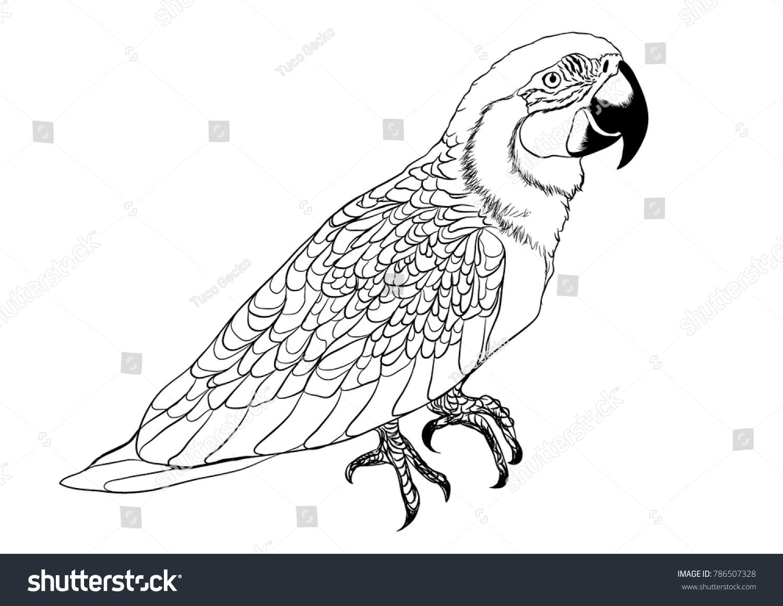 Tropic Bird Parrot Ara