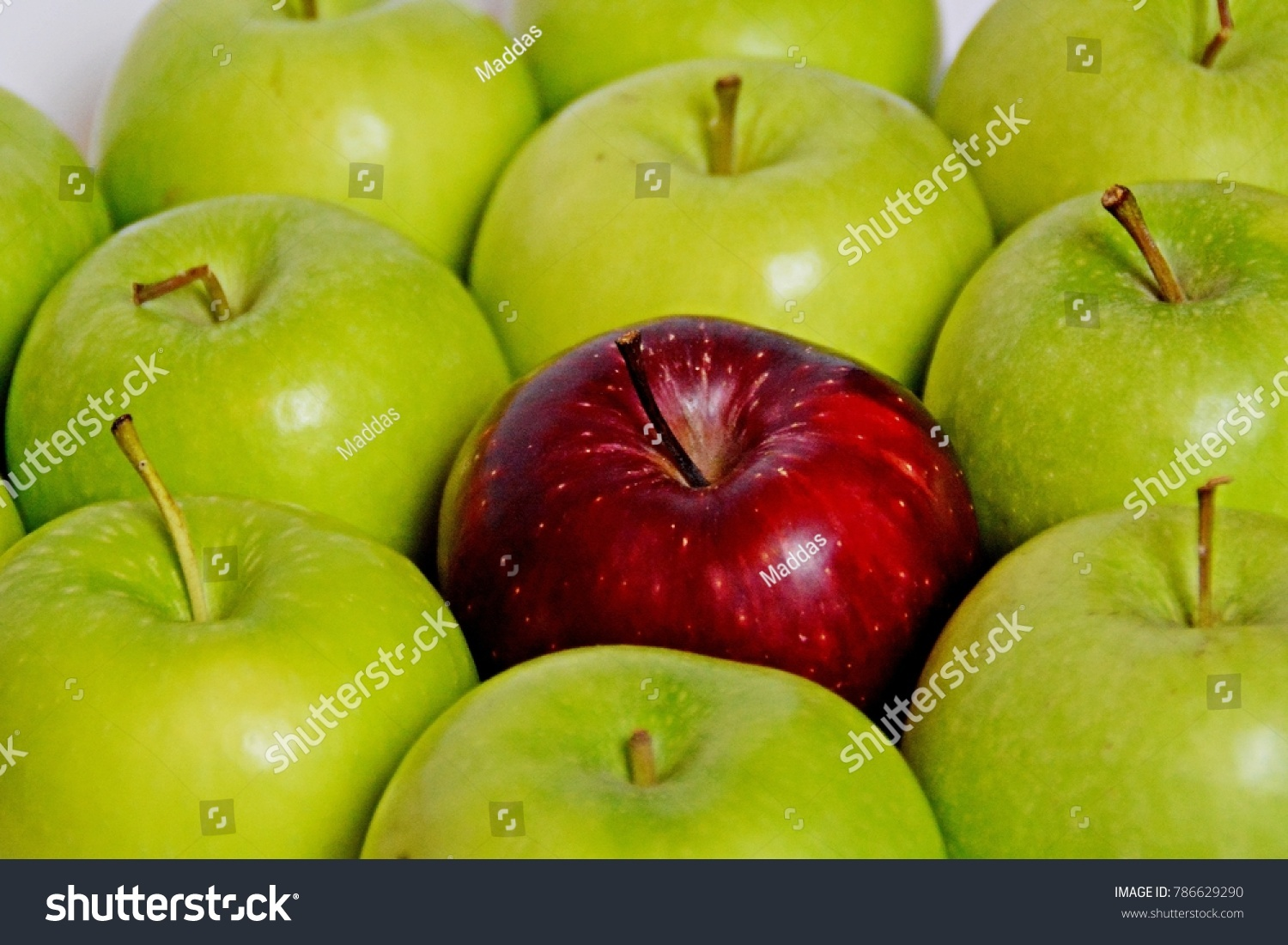 What do apples symbolize images symbols and meanings what do apples symbolize image collections symbols and meanings red apple standing out large group stock buycottarizona Image collections