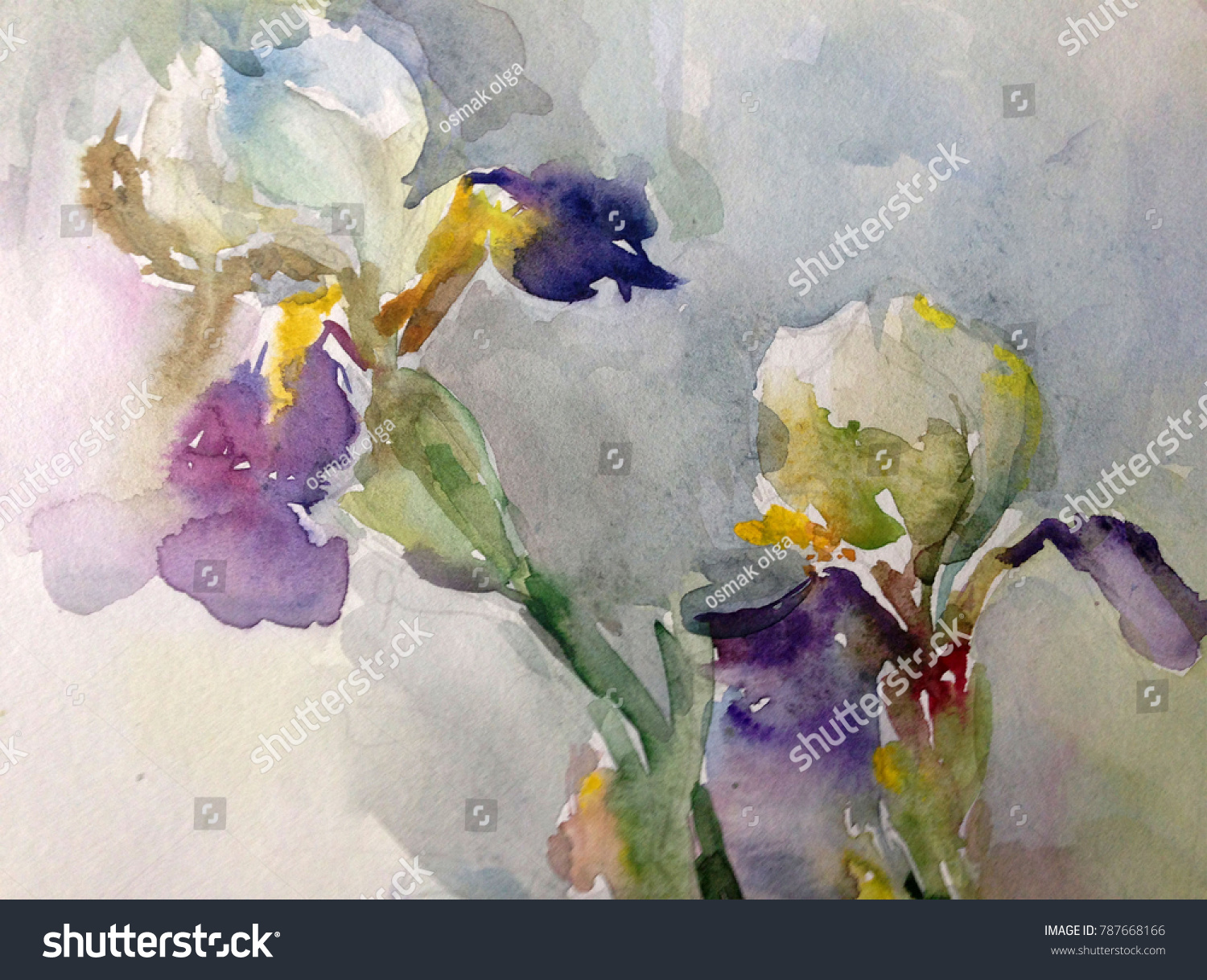 Watercolor Art Background Floral Exotic Iris Flower Painting Spring