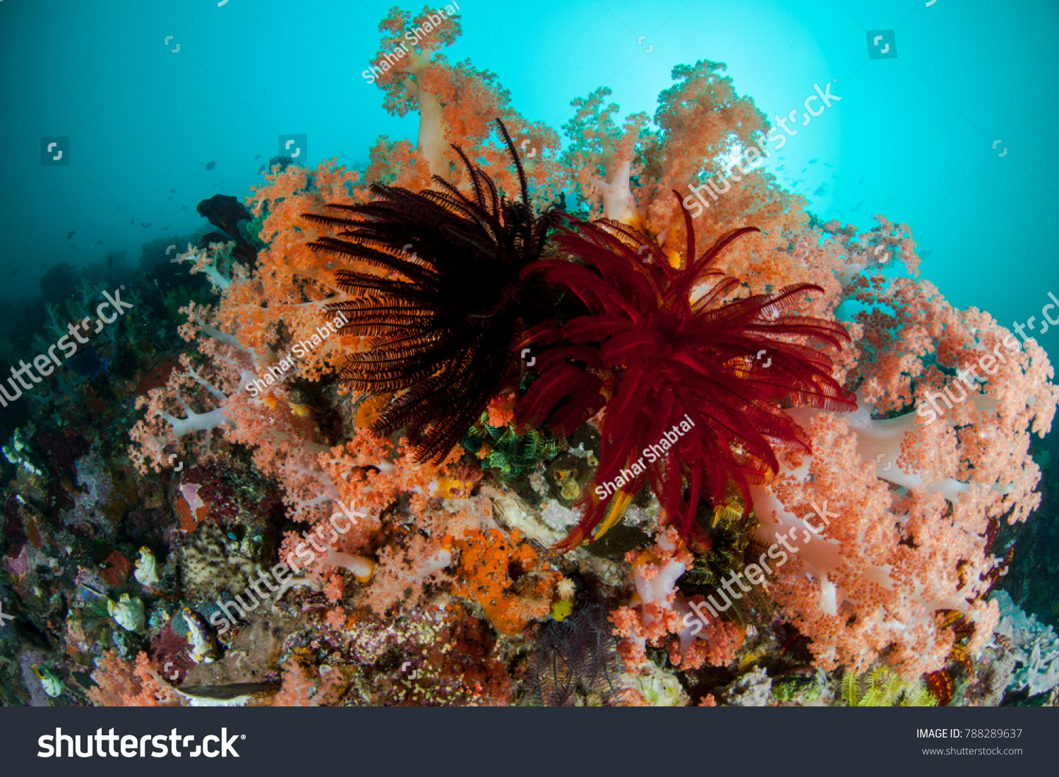 Colorful Coral Reef Feather Stars Soft Stock Photo (Download Now ...