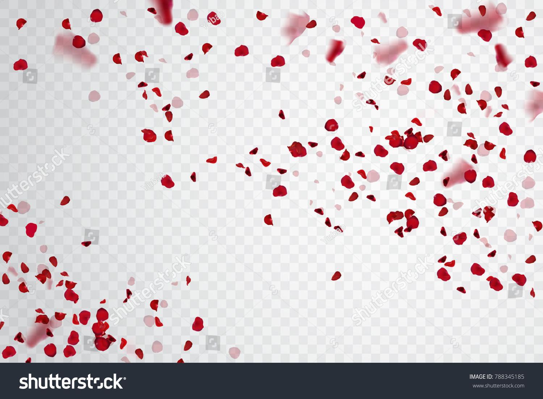 Rose petal falling. Confetti pelal. Vector stock.