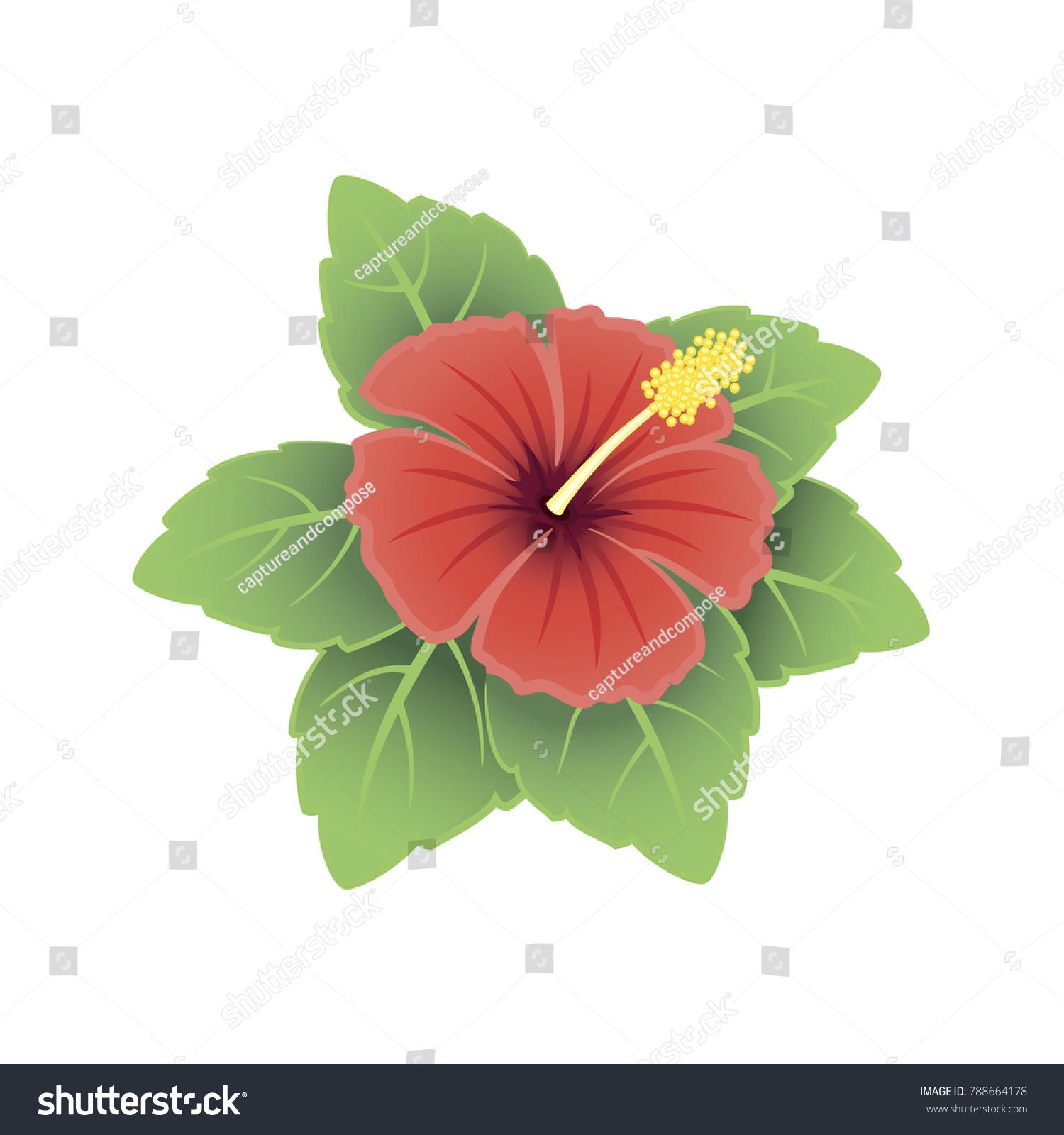 Hawaii Tropical Hibiscus Flower Red Orange Stock Vector Royalty