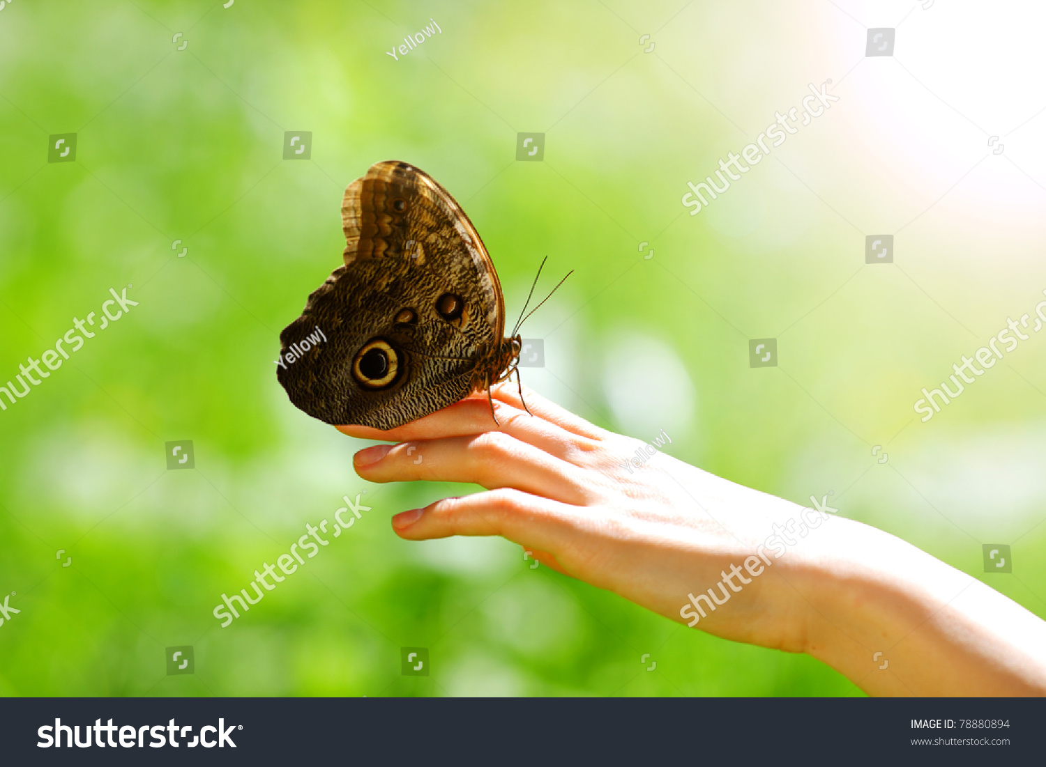 Uncategorized Butterfly Hand butterfly on woman hand close stock photo 78880894 shutterstock up