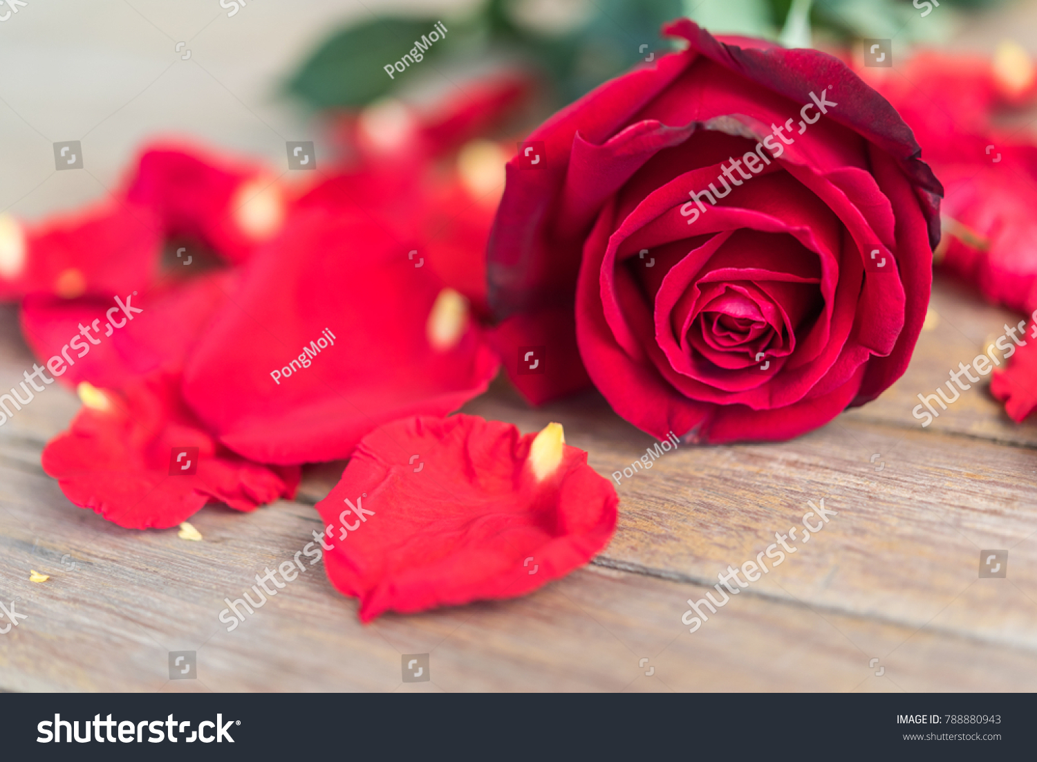 Red rose flower nature beautiful flowers stock photo edit now red rose flower nature beautiful flowers from the garden and petal of red rose flower on izmirmasajfo