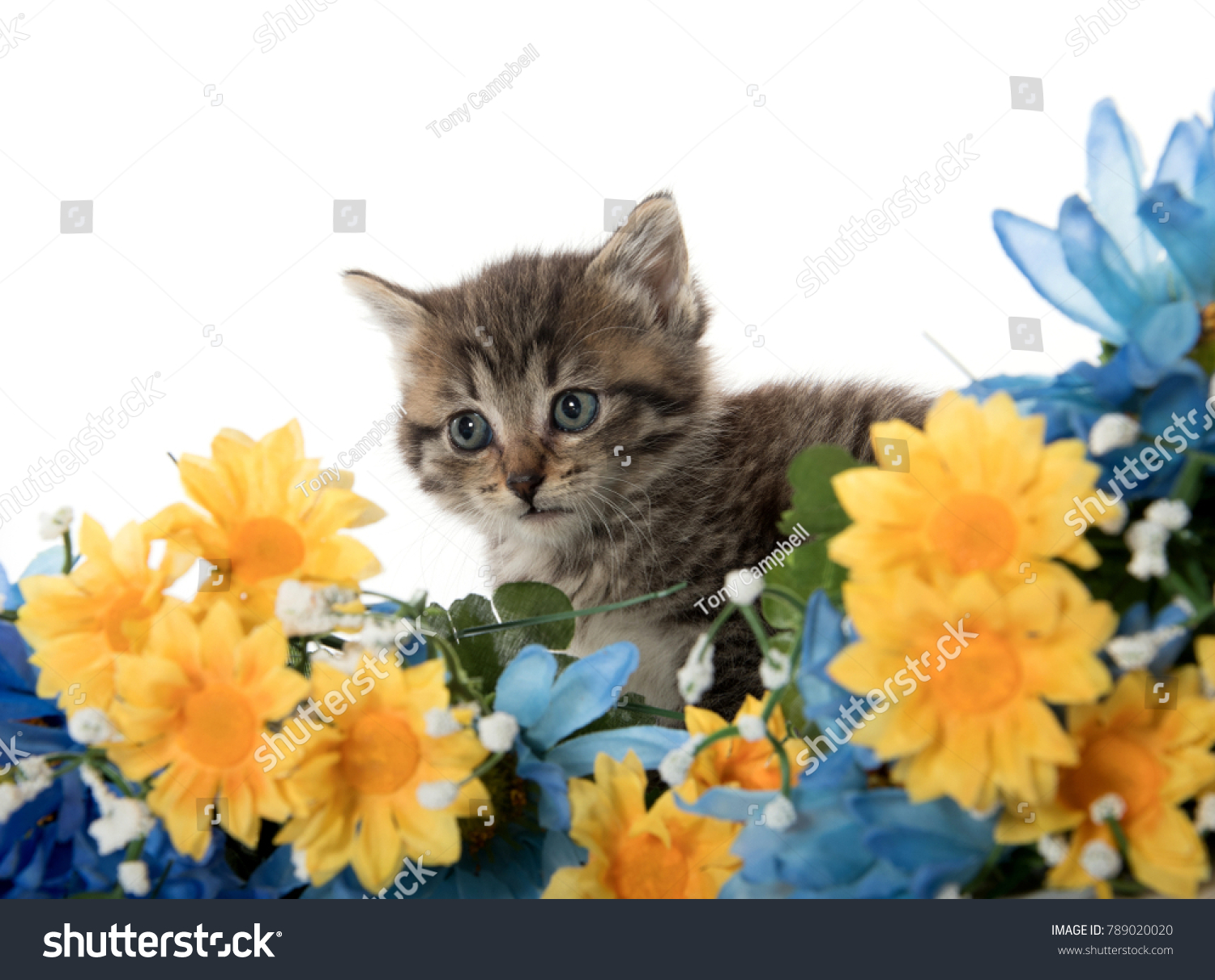 Cute baby tabby kitten with yellow and blue flowers isolated on id 789020020 izmirmasajfo