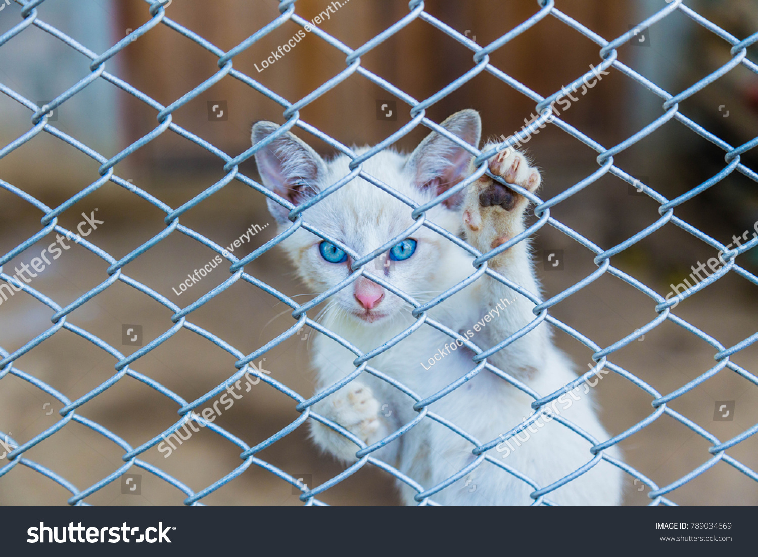 Kitten Want Get Out House By Stock Photo (Royalty Free) 789034669 ...