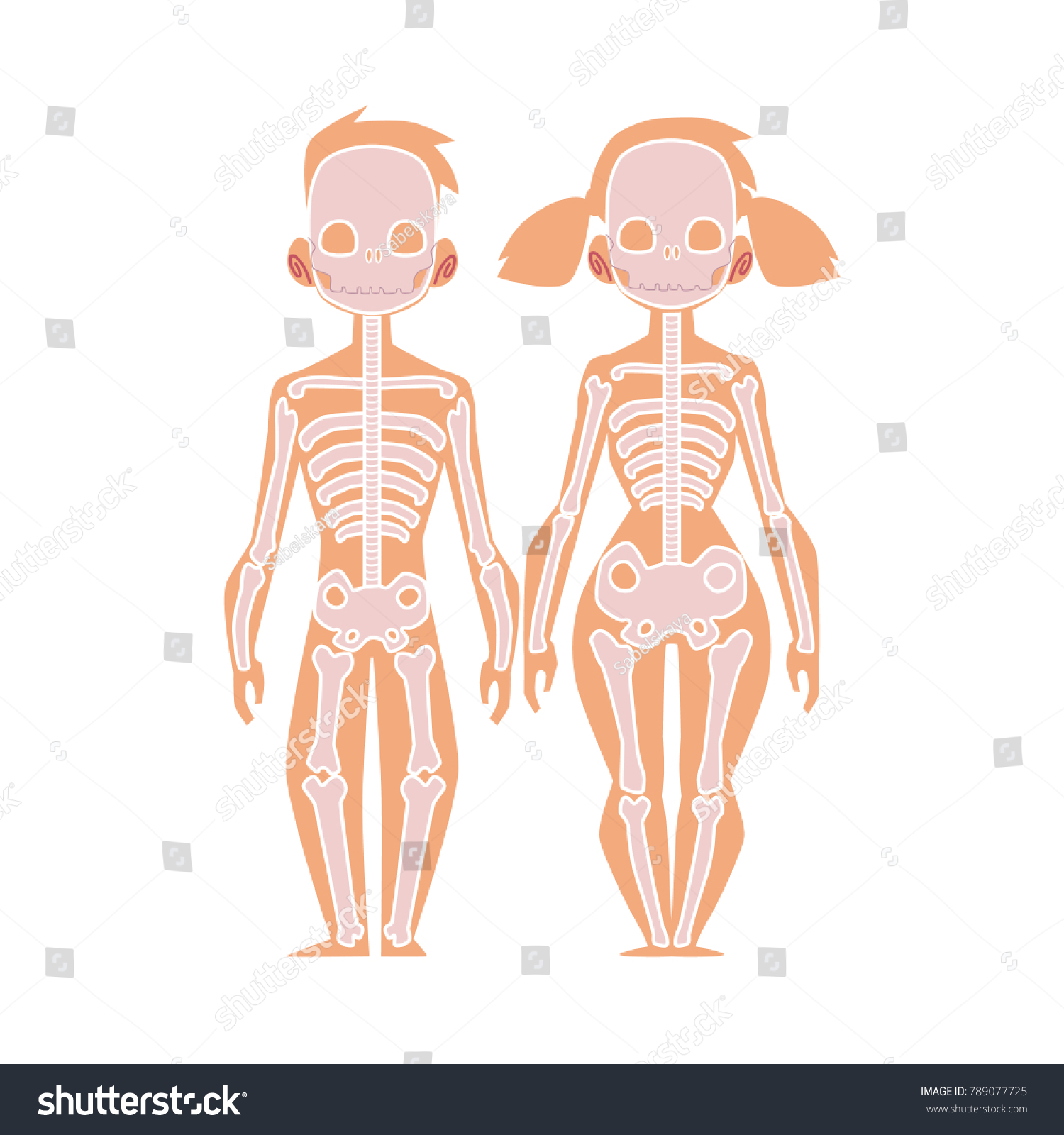 Vector Flat Structure Human Body Anatomy Stock Vector 789077725 ...