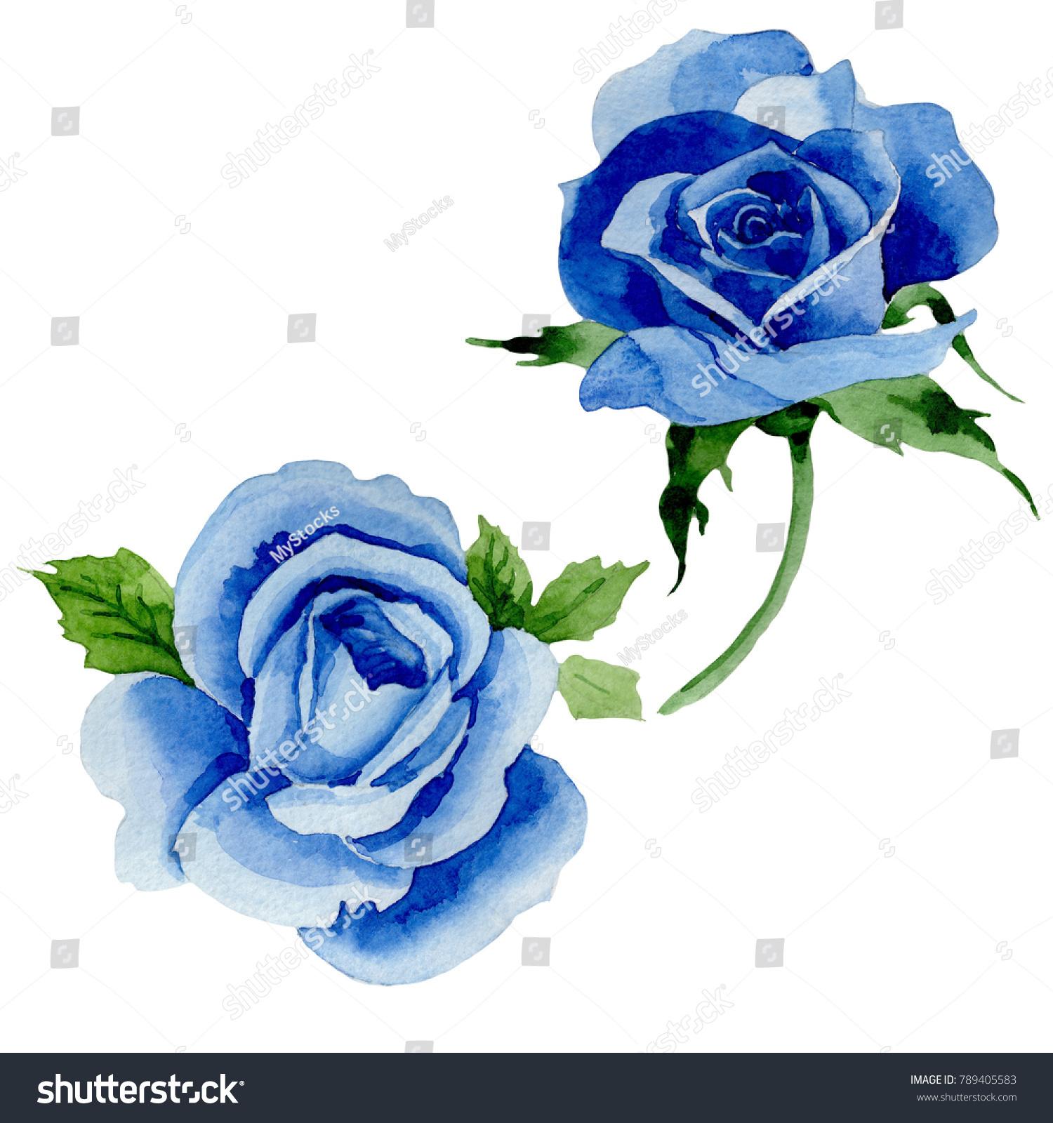 Wildflower Blue Rose Flower Watercolor Style Stock Illustration