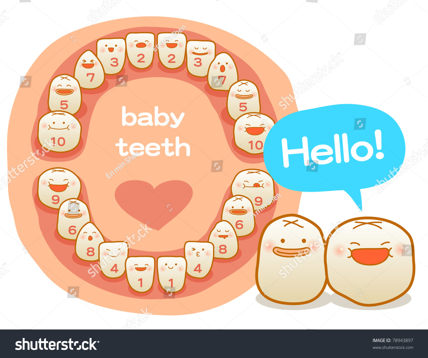 Vector Illustration Baby Teeth First Teeth Stock Vector 78943897 ...