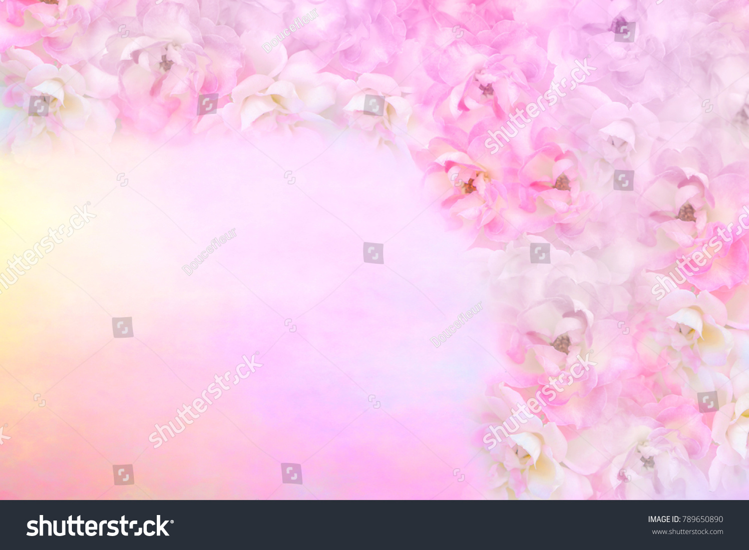 Colorful Soft Pink White Purple Roses Stock Photo Royalty Free 789650890