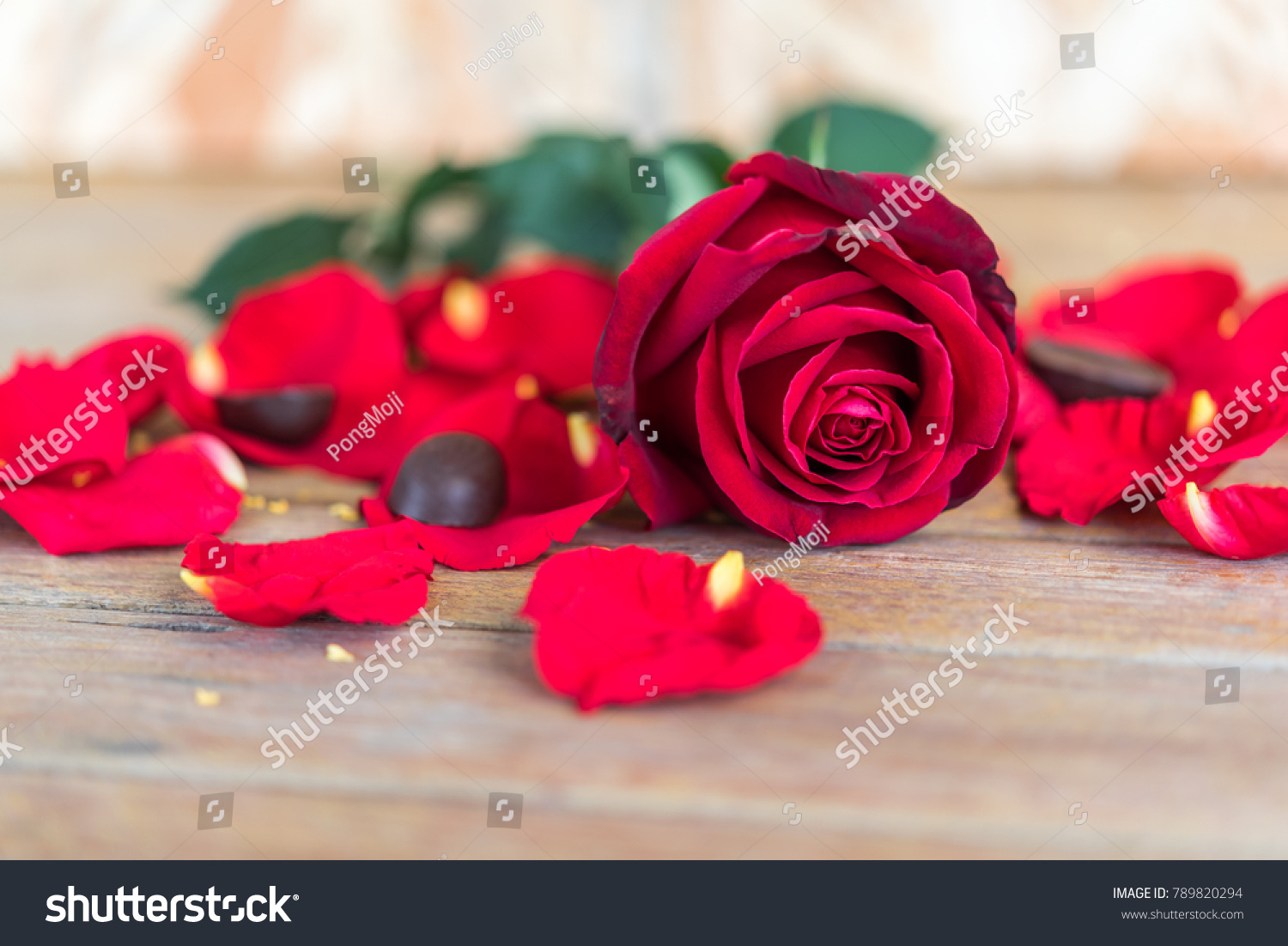 Red Rose Flower Nature Beautiful Flowers Stock Photo Edit Now