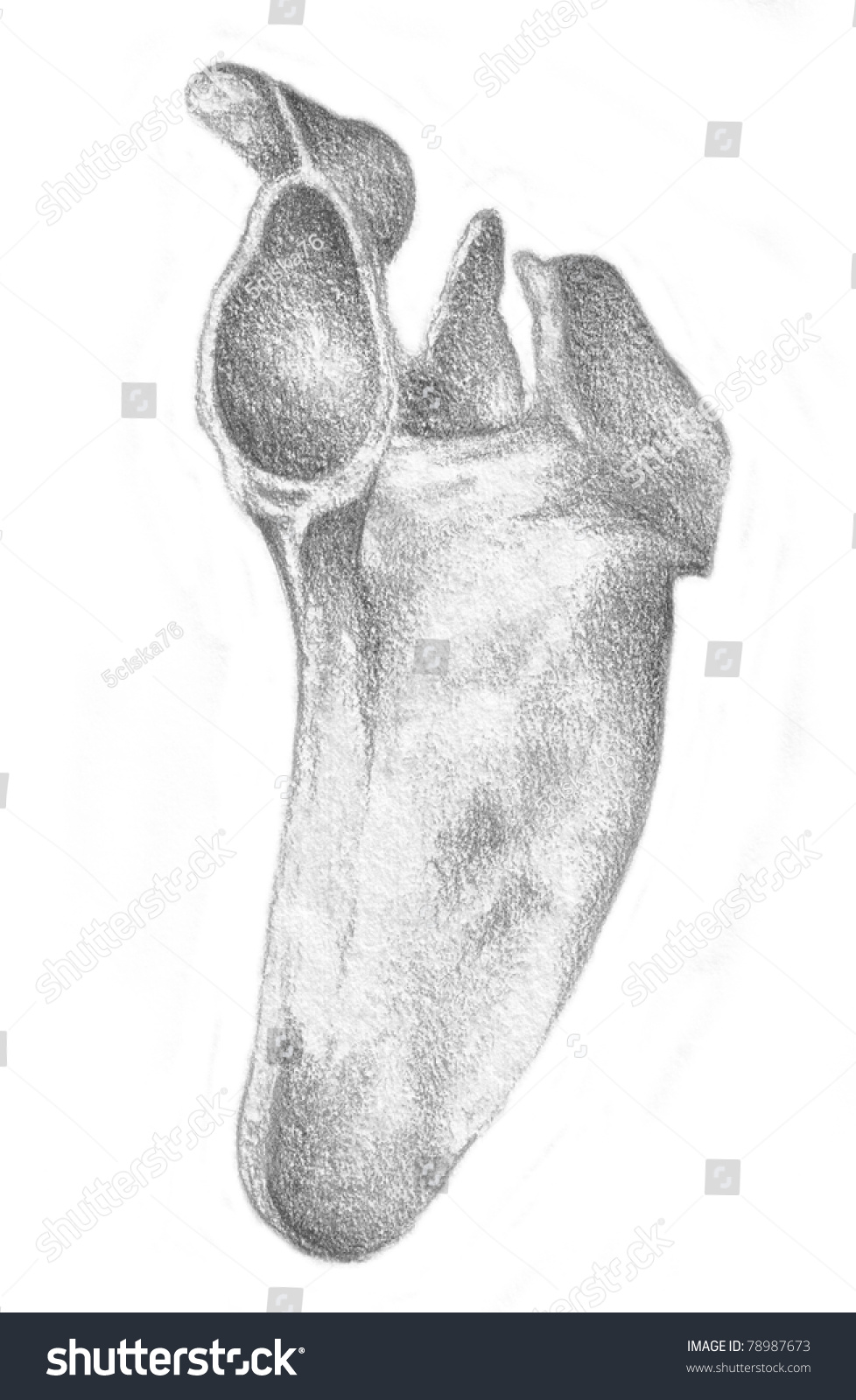 Human Anatomy Shoulder Blade Stock Illustration 78987673 - Shutterstock