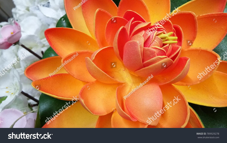 Lotus flower color orange stock photo edit now 789929278 lotus flower color orange izmirmasajfo