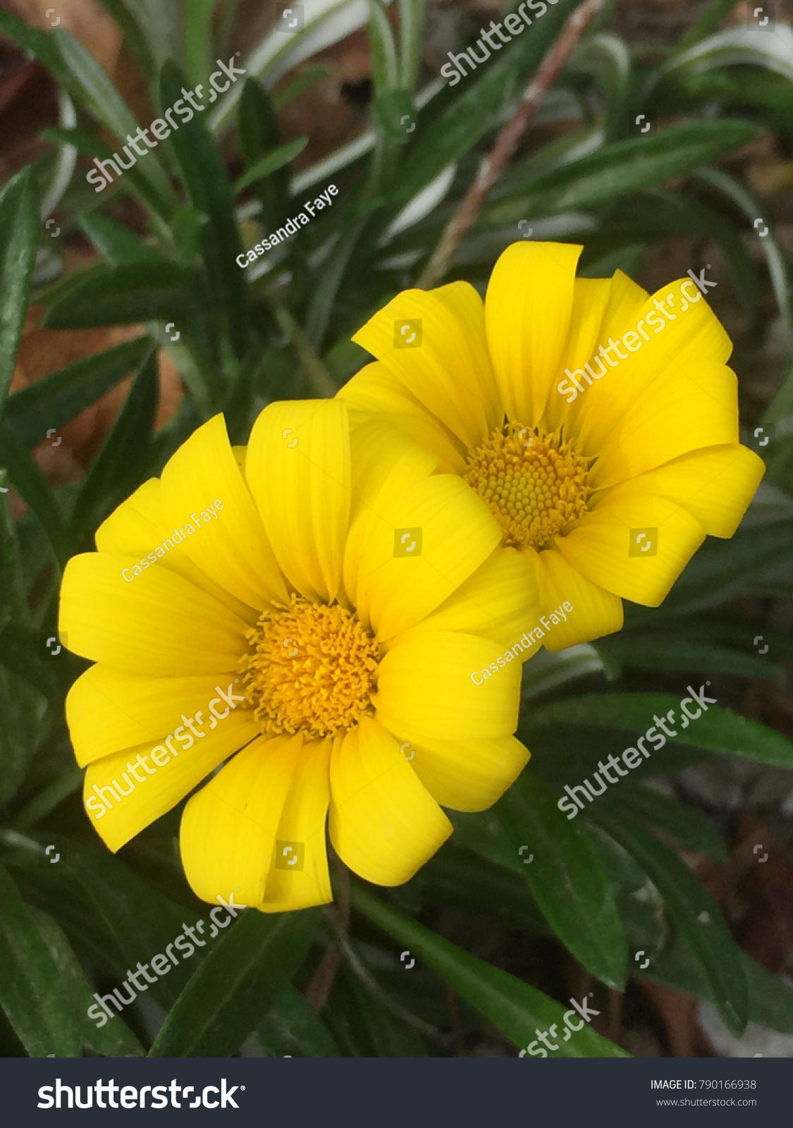 Red Stem Yellow Flowers Ez Canvas