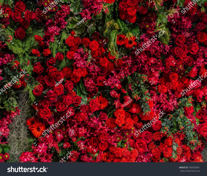 Beautiful natural flowers ornamental garden wall stock photo edit beautiful natural flowers ornamental garden wall background with different types of red flowers as roses izmirmasajfo