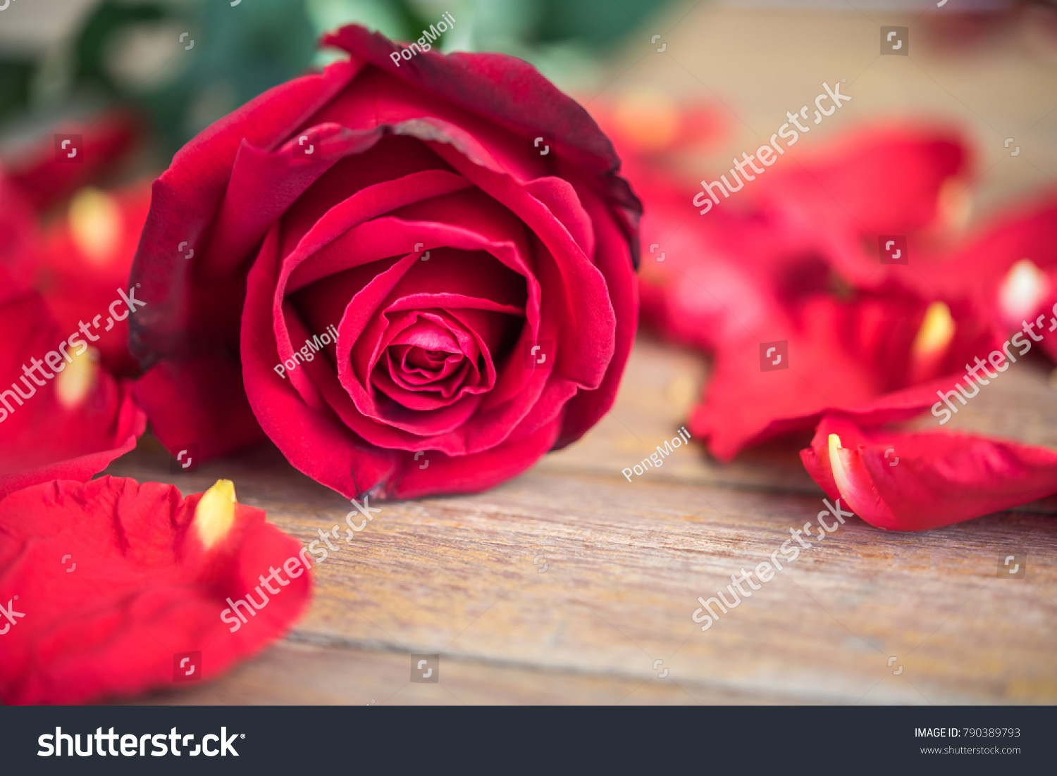 Red rose flower nature beautiful flowers stock photo royalty free red rose flower nature beautiful flowers from the garden and petal of red rose flower on izmirmasajfo