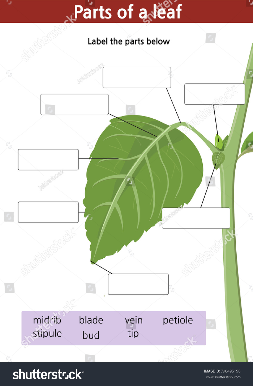Worksheet Label Parts Green Leaf Plant Stock Vector Hd Royalty Free