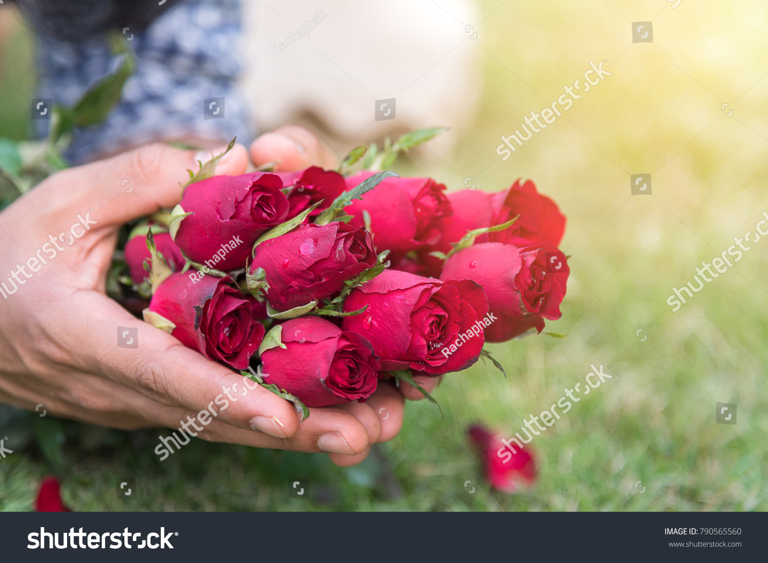 Man Hold Fresh Red Roses Offer Stock Photo Royalty Free 790565560
