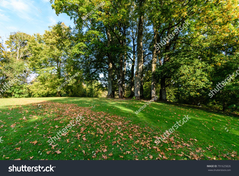 Sunny Day Summer Park Green Grass Stock Photo (Royalty Free ...