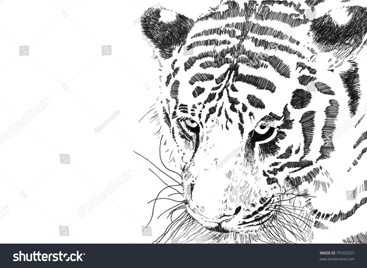 Tiger Face Head Close Isolated On Stock Illustration 79163257 ...