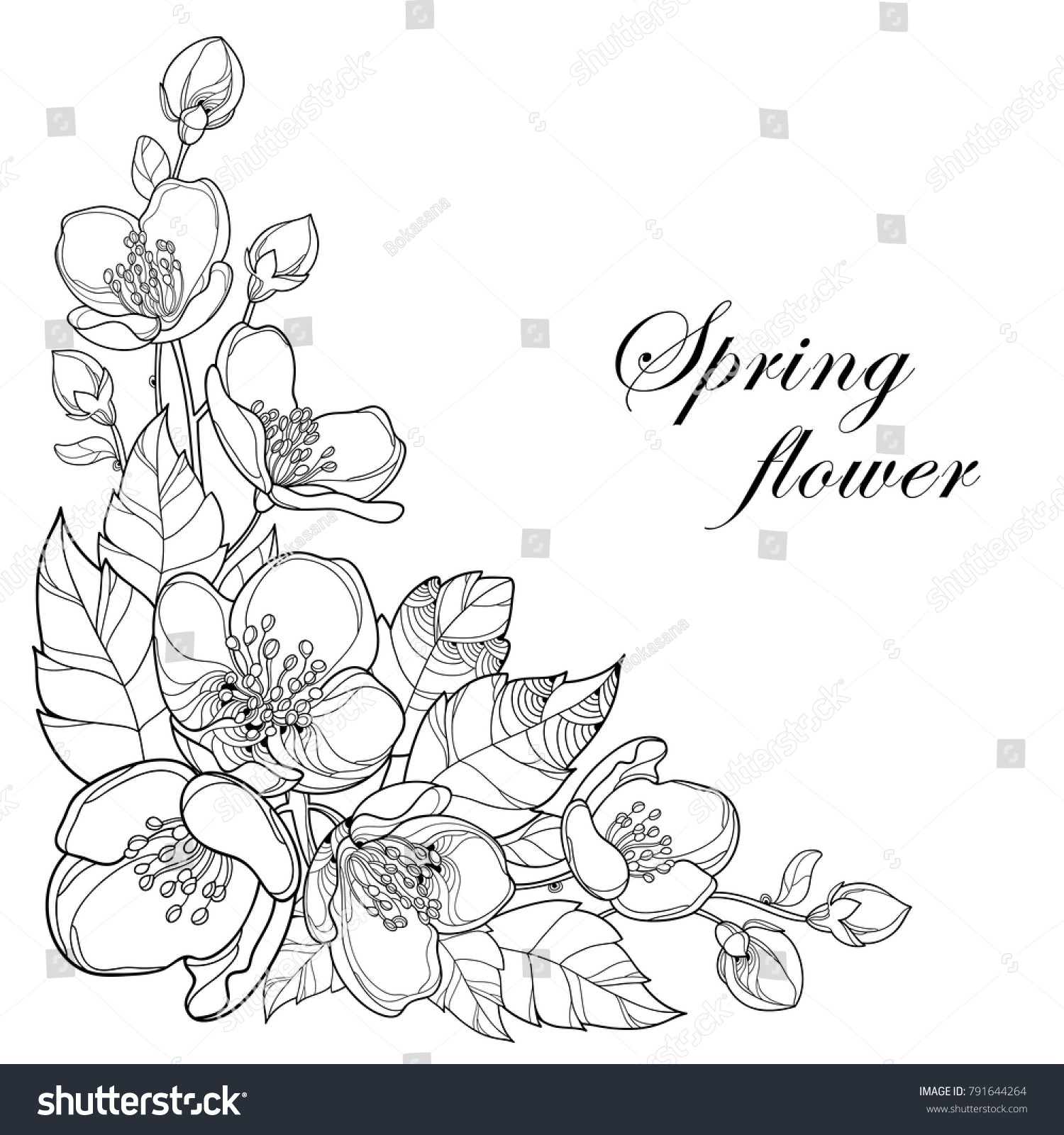 Vector Branch Outline Jasmine Flowers Bud Stock Vector Royalty Free