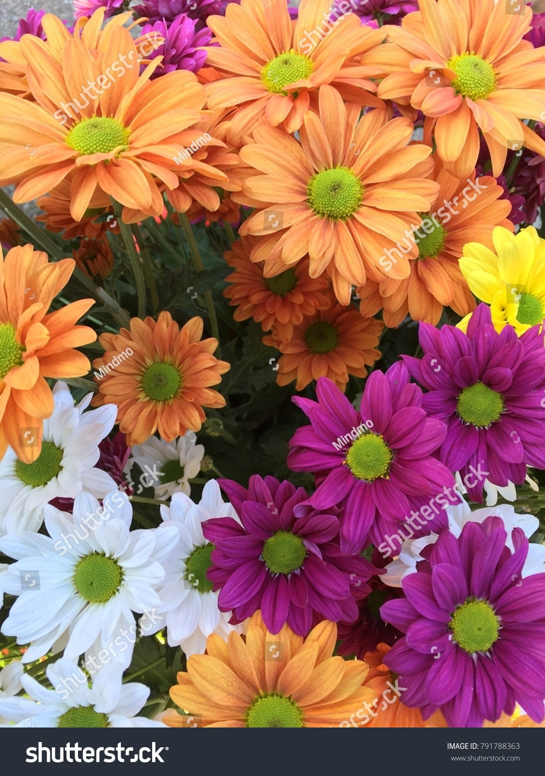 Colorful Daisy Flowers Background Stock Photo Edit Now 791788363