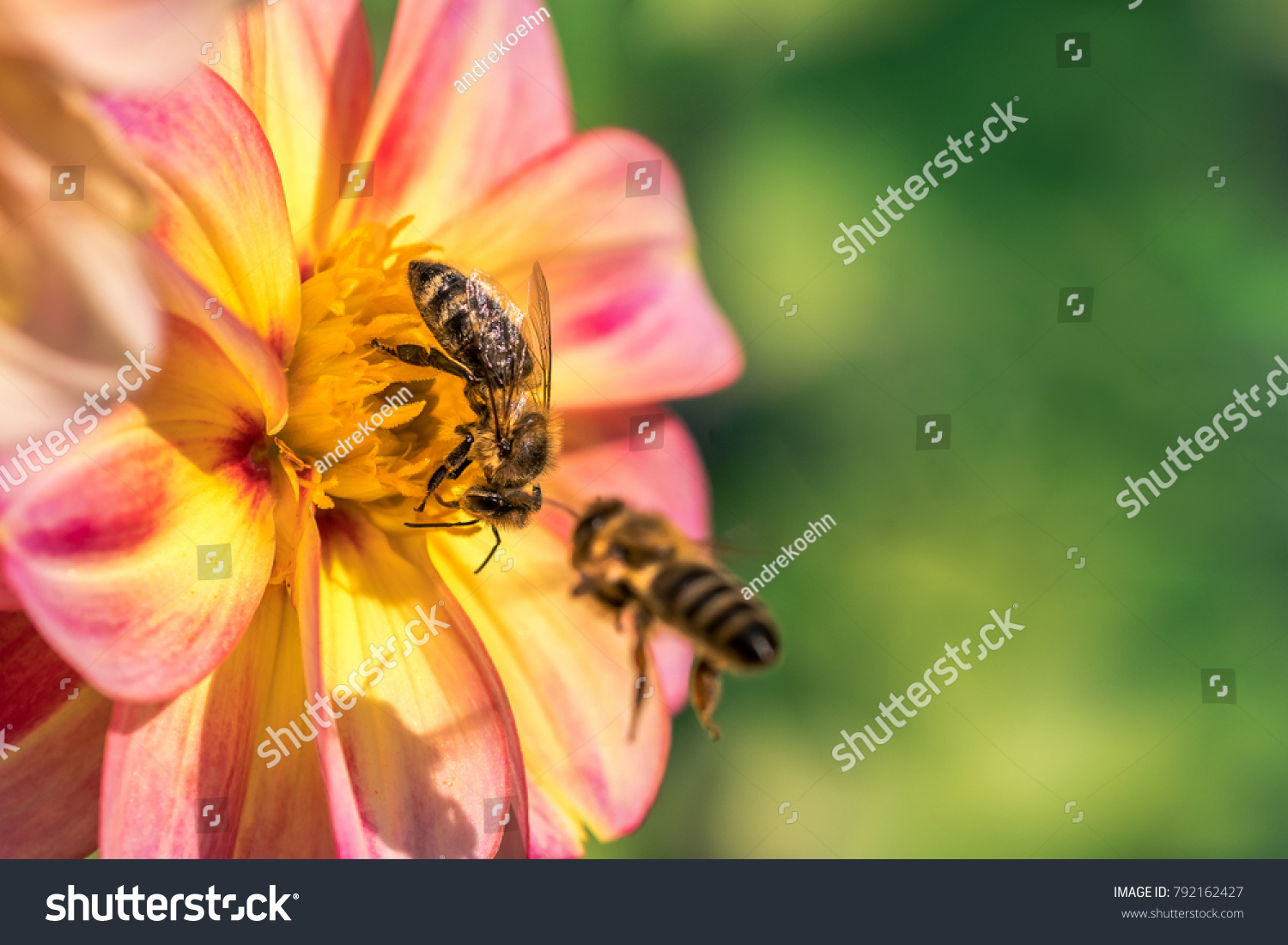 Insects Frolic On Colorful Flowers Suck Stock Photo (Royalty Free ...