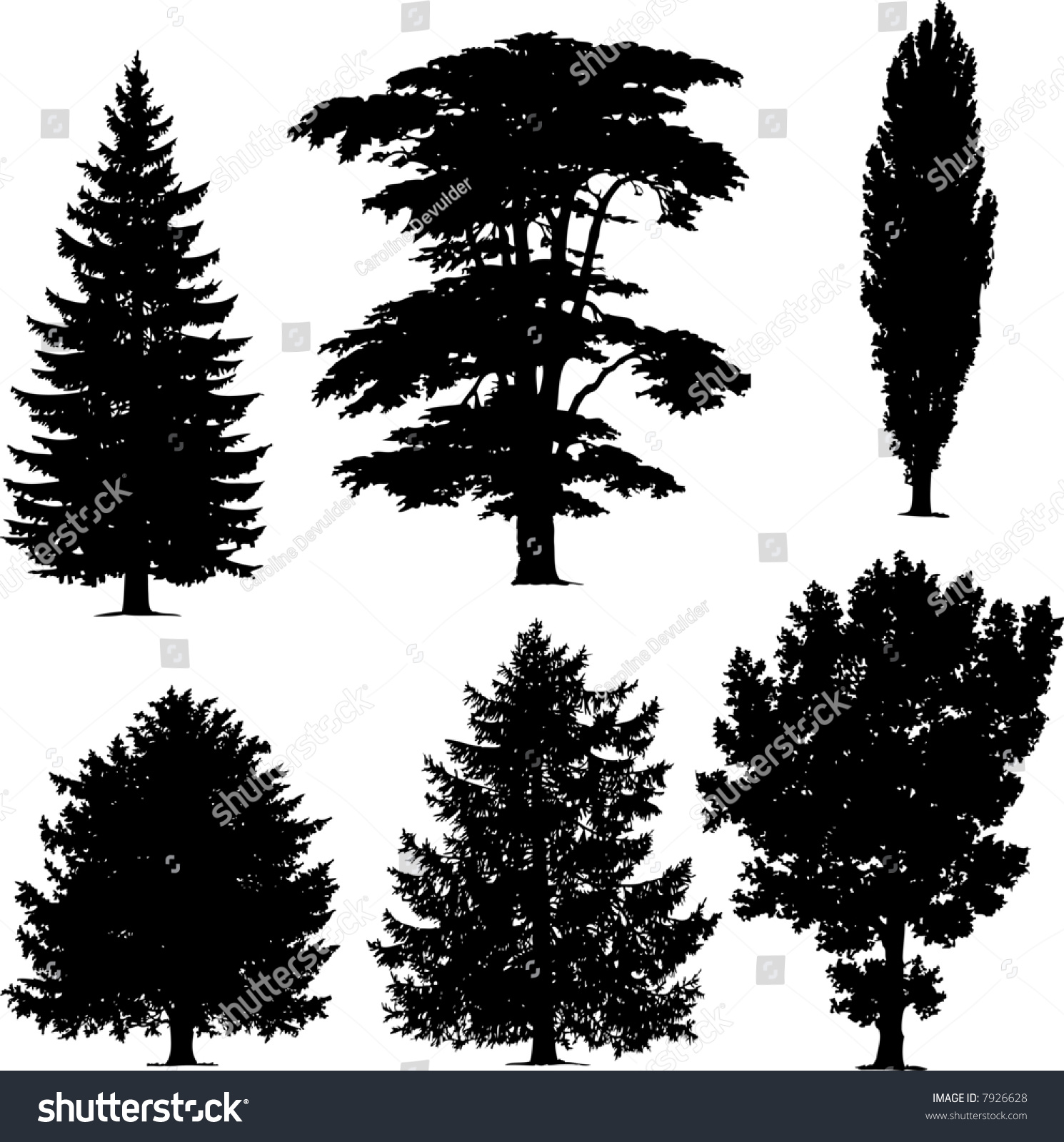 collection of pine trees stock vector 7926628 shutterstock vector pine trees free vector images of pine trees