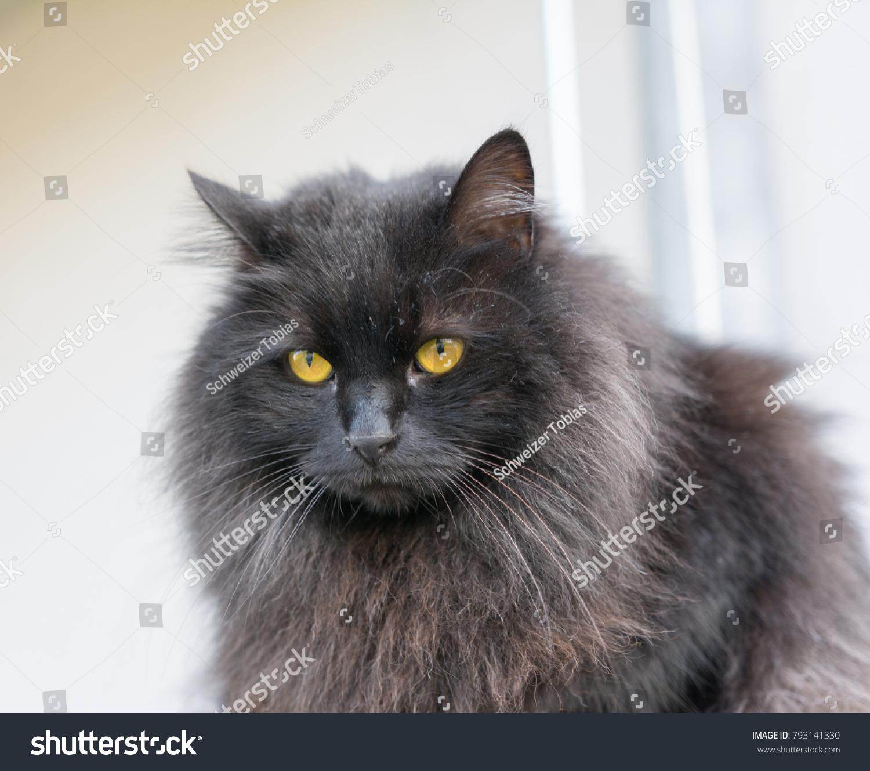 Black Cat Beautiful Orange Eyes Stock Photo Edit Now 793141330
