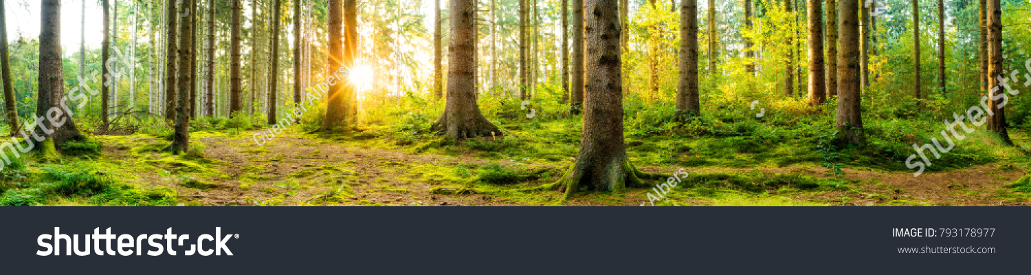 Panorama of a beautiful forest at sunrise #793178977