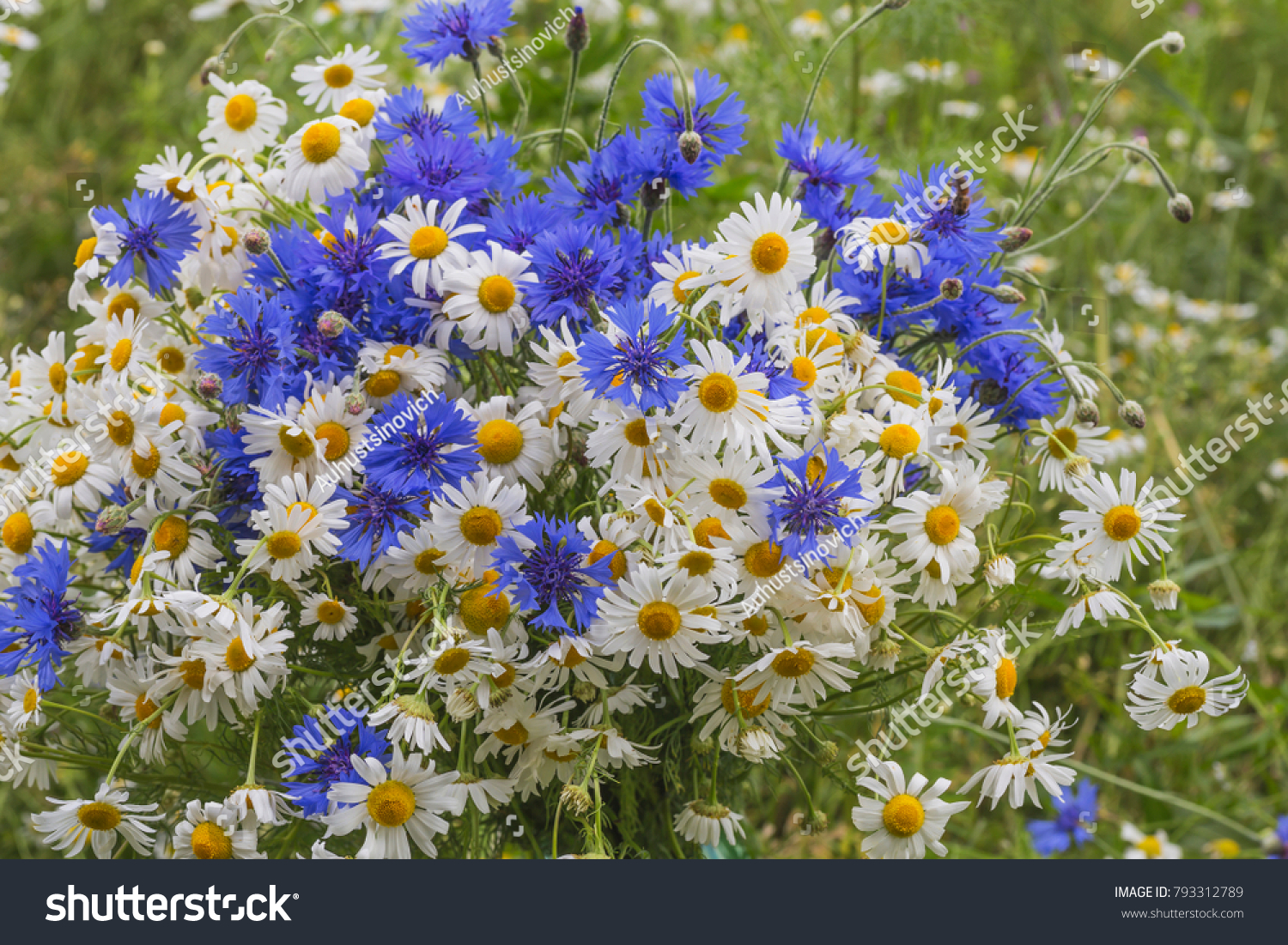 Bouquet Of Spring Flowers Of Camomiles And Cornflowers Ez Canvas