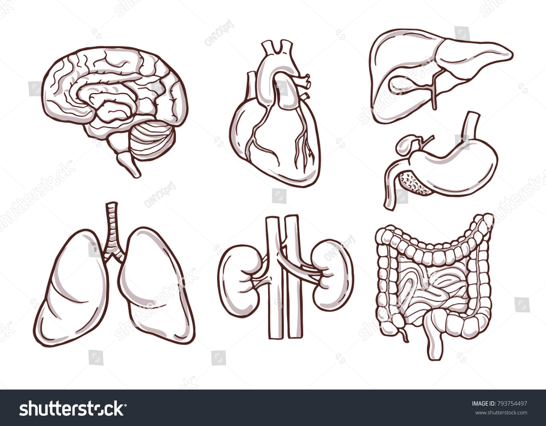Hand Drawn Illustration Human Organs Medical Stock Vector Royalty