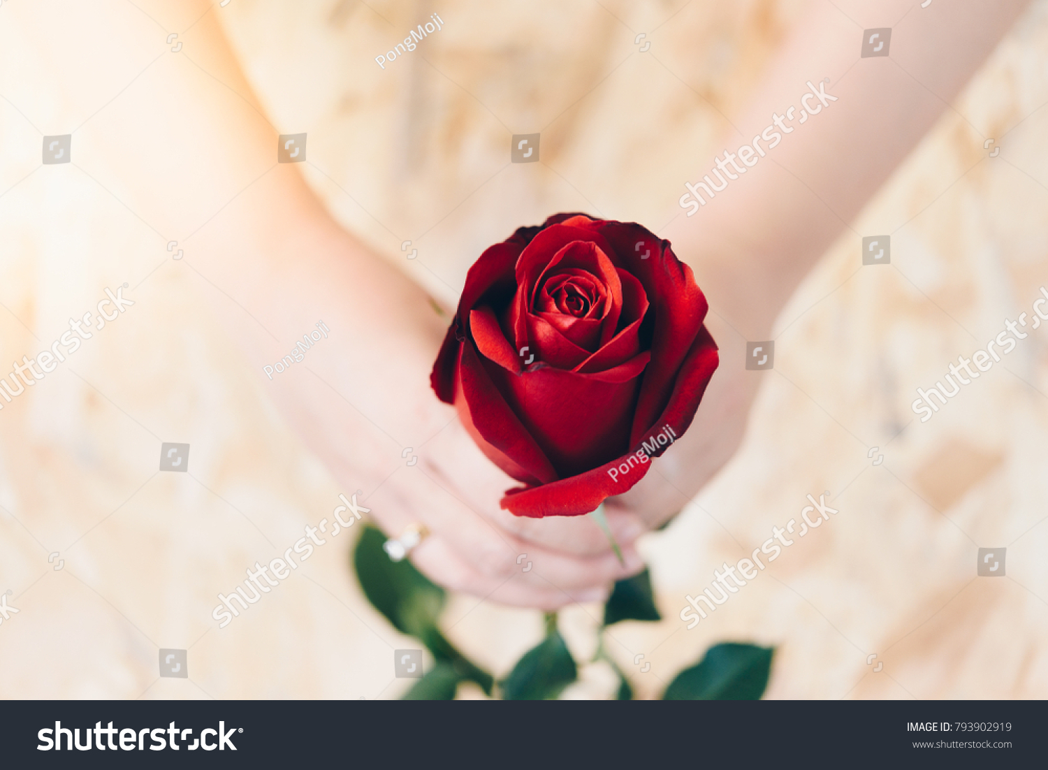 Red rose flower nature beautiful flowers stock photo royalty free red rose flower nature beautiful flowers from the garden and human hand holding red rose flower izmirmasajfo Image collections