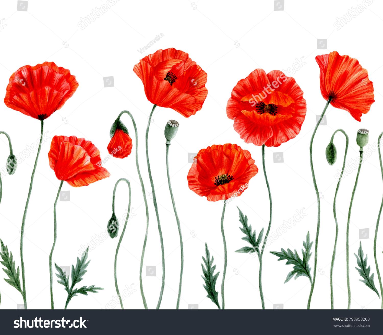 Watercolor Botanical Illustration Red Poppy Flowers Stock