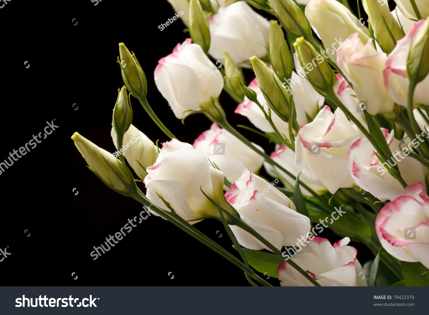 nice flowers stock foto   shutterstock, Beautiful flower